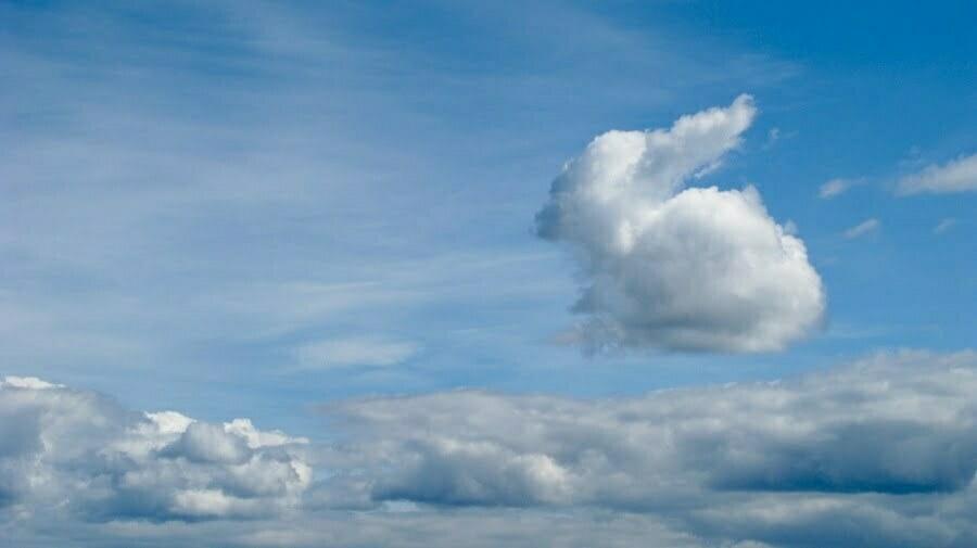 rabbit cloud   rx photographyrx photography
